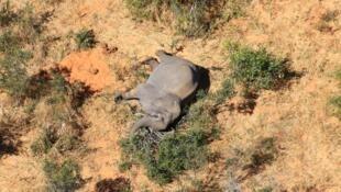 Uno de los cientos de elefantes muertos misteriosamente en Botsuana, distribuida a principios de julio por el grupo conservacionista National Park Rescue