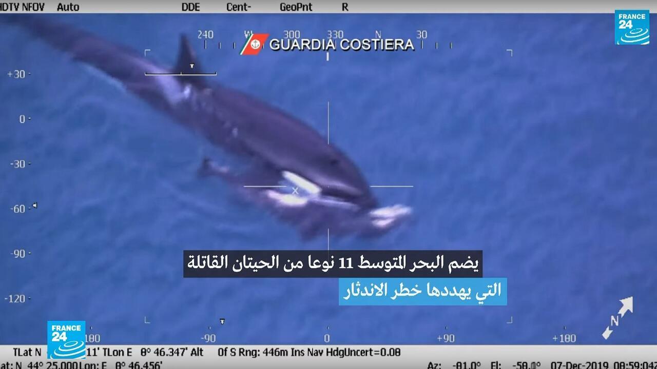الحيتان