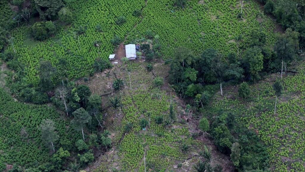 Una vista aérea de las plantaciones de coca en Tumaco, Colombia, 26 de febrero de 2020.