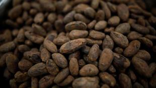 Granos de cacao vistos durante un tour en las instalaciones de Canopy Growth, en Ontario, Canadá, el 29 de octubre de 2019.