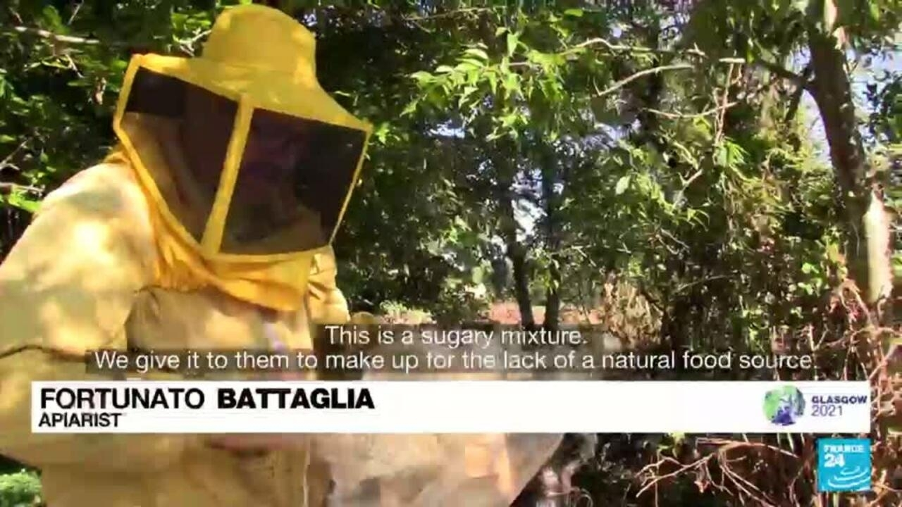 Climate change: Italian beekeepers' heavy losses in Sicily - France 24