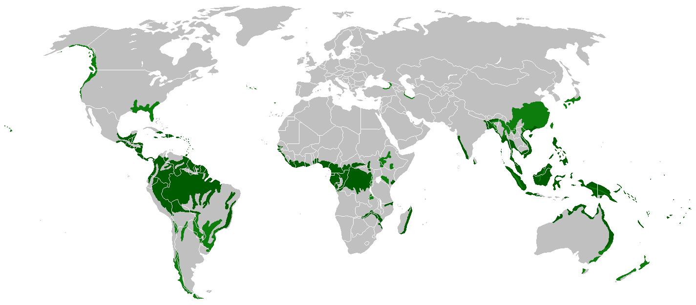 América Latina alberga más de la mitad de las selvas tropicales del mundo, el sudeste asiático y las islas del Pacífico contienen el 25% y en África occidental está el 18% restante.