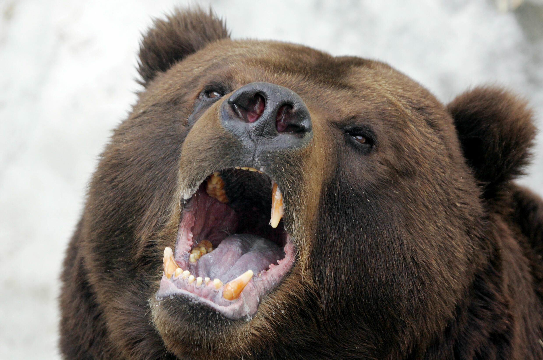 Il existe actuellement des dizaines d'espèces pour les zones de brûlage en Russie
