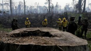 Bomberos y soldados brasileños en un incendio en la selva amazónica causada por la tala ilegal de árboles en Río Pardo, Rondonia, Brasil, el 16 de septiembre de 2019.