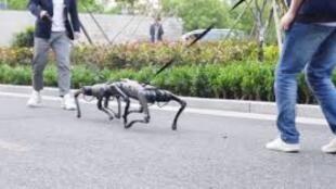 كلاب روبوتية تتعارك في الشارع مثل الكلاب الحقيقية