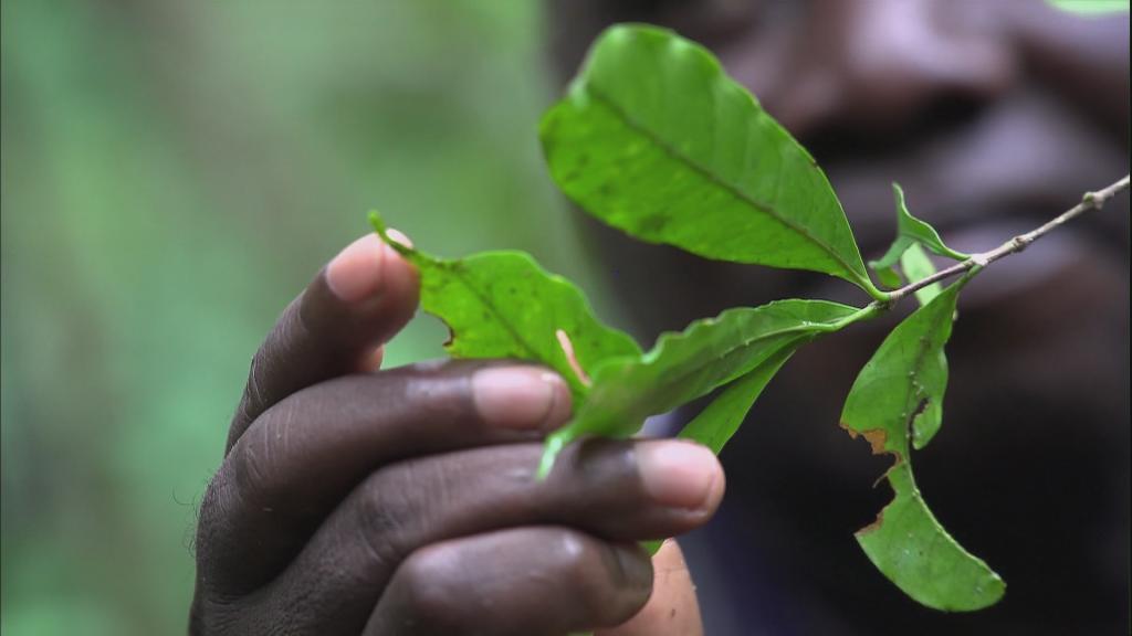 ENDN REPORT 0710 SIERRA LEONE NEW COFFEE PLANT (2021)_ Ep 218