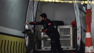 موظف في الطب الشرعي التركي يستخدم كلبا بوليسيا لفحص مرأب سيارات في إسطنبول ضمن التحقيقات في خاشقجي 23 تشرين الأول/أكتوبر 2018