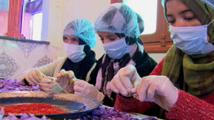 A Taliouine, des femmes émondent le safran pour en extraire le pistil.