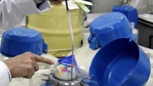 Des échantillons de sperme conservés dans des cuves d'azote liquide au Centre d'étude et de conservation des oeufs et du sperme (CECOS) à l'hôpital Femme-Mère-Enfant de Lyon le 25 Mars 2010