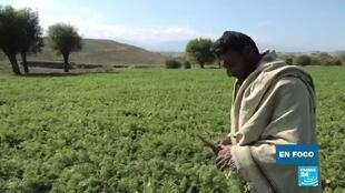 Afganistán amnistía