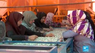 Estados Unidos era el principal comprador de pistacho, las sanciones han golpeado fuerte la industria iraní.