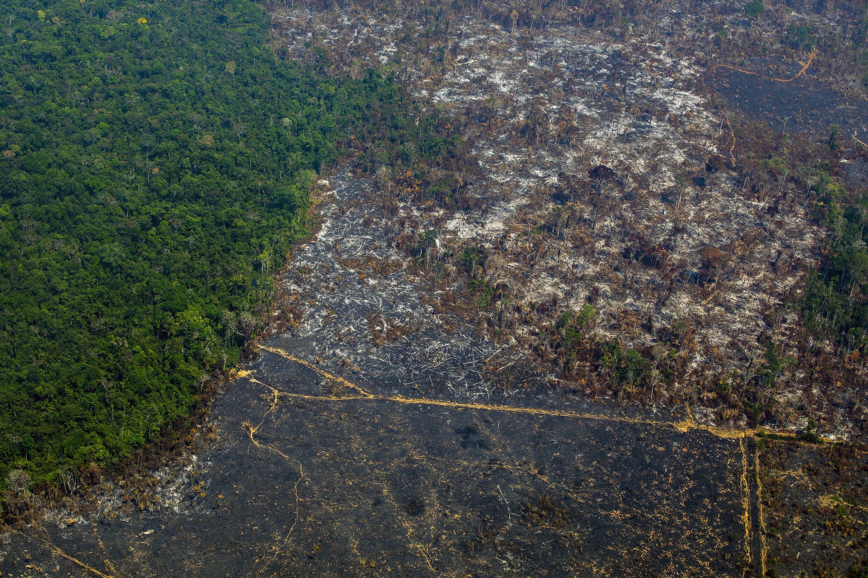 Les critiques du capital naturel disent que la législation, et non les incitations financières, ferait mieux pour protéger les écosystèmes restants