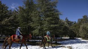 Des guides locaux montent leurs montures dans la neige à Azrou, une ville de la province nord de l'Ifrane au Maroc, dans les montagnes de l'Atlas, le 8 février 2021
