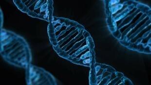 Des scientifiques britanniques ont réussi à créer une ADN synthétique qui a produit une enzyme artificielle.