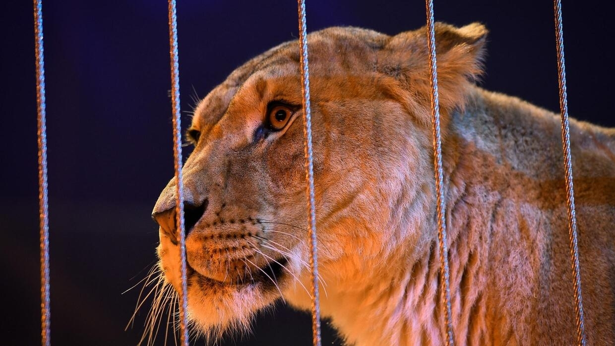 As France dithers, Paris moves to ban wild animals from circuses - FRANCE 24