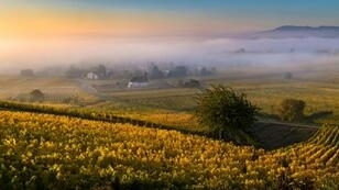 Written records suggest viniculture in France dates back to the sixth century BCE