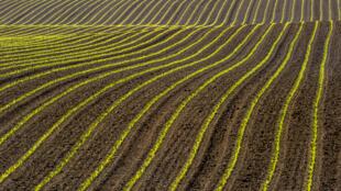 L'agriculture aura une dotation spécifique de 1,2 milliard d'euros pour redonner un peu de compétitivité à un secteur qui a souffert pendant la crise sanitaire
