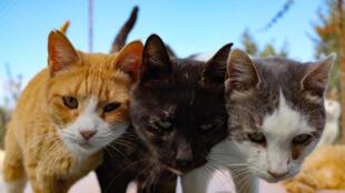 Chats et chiens pourront aussi être testés au coronavirus en Corée du Sud