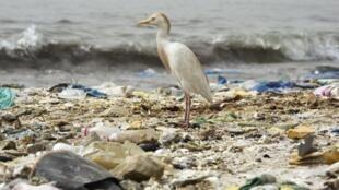 De aquí al 2030, la cantidad acumulada de desechos en el océano se podría duplicar.