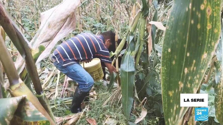 Julio Andrés durante sus labores matutinas en Silvania, Cundinarmarca, centro de Colombia.