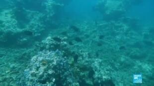 2020-06-08 16:08 Journée mondiale des océans : comment protéger cet écosystème ?