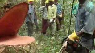 En Centrafrique, la filière forestière représente la majorité des recettes du pays en exportations.