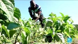 2020-07-10 05:10 African immigrants set farming cooperatives in Italy and raise hope for better labour conditions