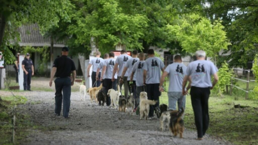 Serbian prisoners and dogs give each other a new lease on life