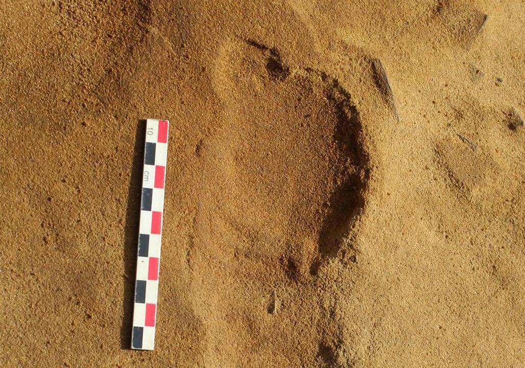 L'une des traces de pas découvertes au Rozel.