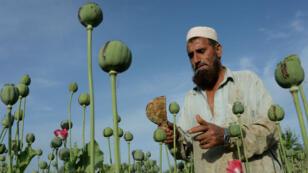 Producteur de pavot dans un champ de la province de Nangarhar, en Afghanistan, le 19 avril 2016.