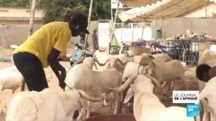 2020-07-29 21:50 Fatou, l'éleveuse de moutons de Dakar