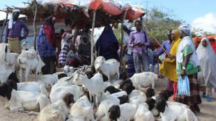 أشخاص يشترون الماعز والأغنام لعيد الأضحى في مقديشو بتاريخ 30 تموز/يوليو 2020
