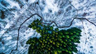 Vue aérienne de la forêt Kalbyris au Danemark.