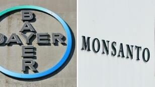 Bayer's acquisition of US seeds maker Monsanto has turned out to be a millstone around the German company's neck