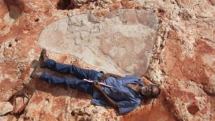 """L'empreinte de 1,75 mètre de longueur a été localisée dans le """"Jurassic Park"""" australien, du nom d'une zone riche en traces de dinosaures."""