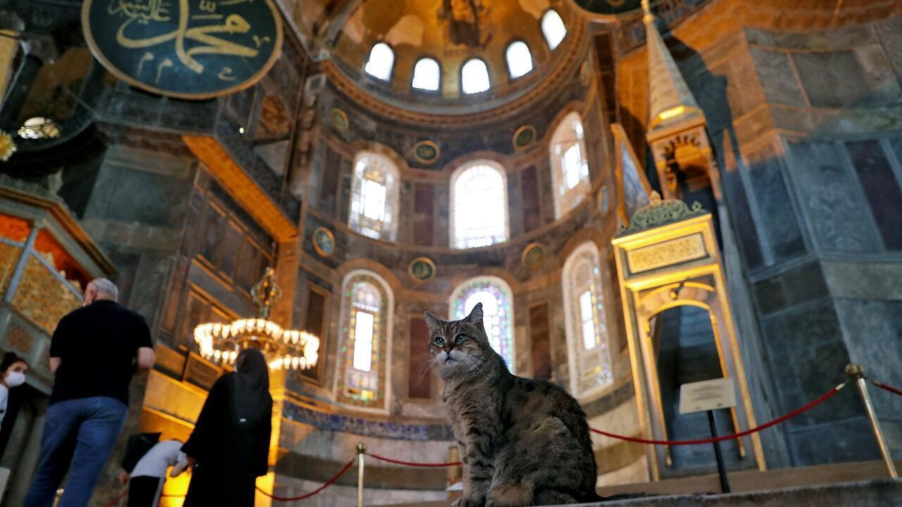 غلي.. قطة آيا صوفيا الشهيرة. اسطنبول، تركيا في 2 يوليو/حزيران 2020.