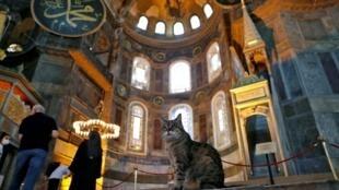 2020-07-23T195429Z_627709623_RC27ZH9DACLX_RTRMADP_3_TURKEY-HAGIASOPHIA-CAT