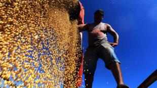 Un céréalier récolte du soja dans l'Etat de Rio Grande do Sul, au Brésil, premier producteur mondial, le 7 avril 2021