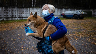"""Un """"chien-chacal"""" entraîné à détecter le coronavirus au centre de dressage de la compagnie aérienne Aeroflot, le 9 octobre 2020 près de Moscou"""