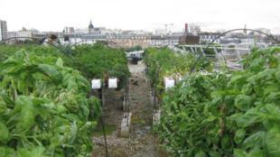 Una granja en un tejado de la operadora de metro RATP.