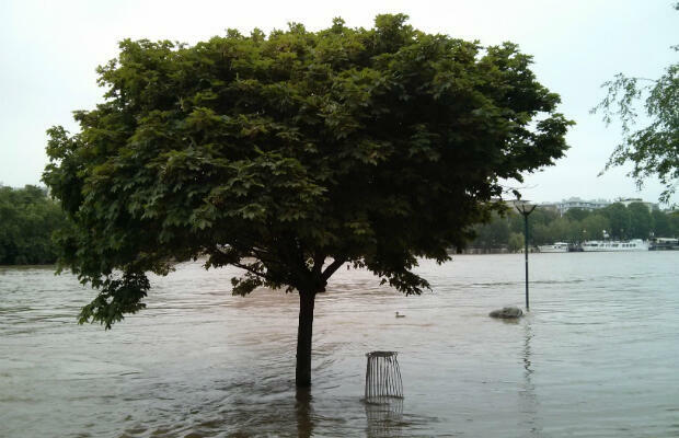 A tree and bin partially submerged by the Seine just east of Pont de Sully, Left Bank.