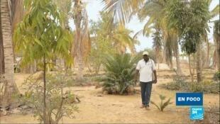 Goran N'diaye cultiva verduras en medio del desierto, aplicando los principios de la permacultura.