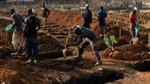 Des fossoyeurs dans un cimetière de Freetown en Sierra Leone, novembre 2014.