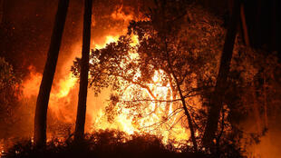 The fire rages in the Chiberta forest, in the southwestern French municipality of Anglet