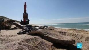 2021-02-22 18:16 Marée noire en Israël : le littoral lourdement touché, le nettoyage est en cours