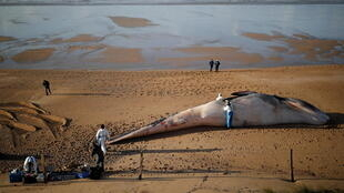 _FRANCE-WHALES