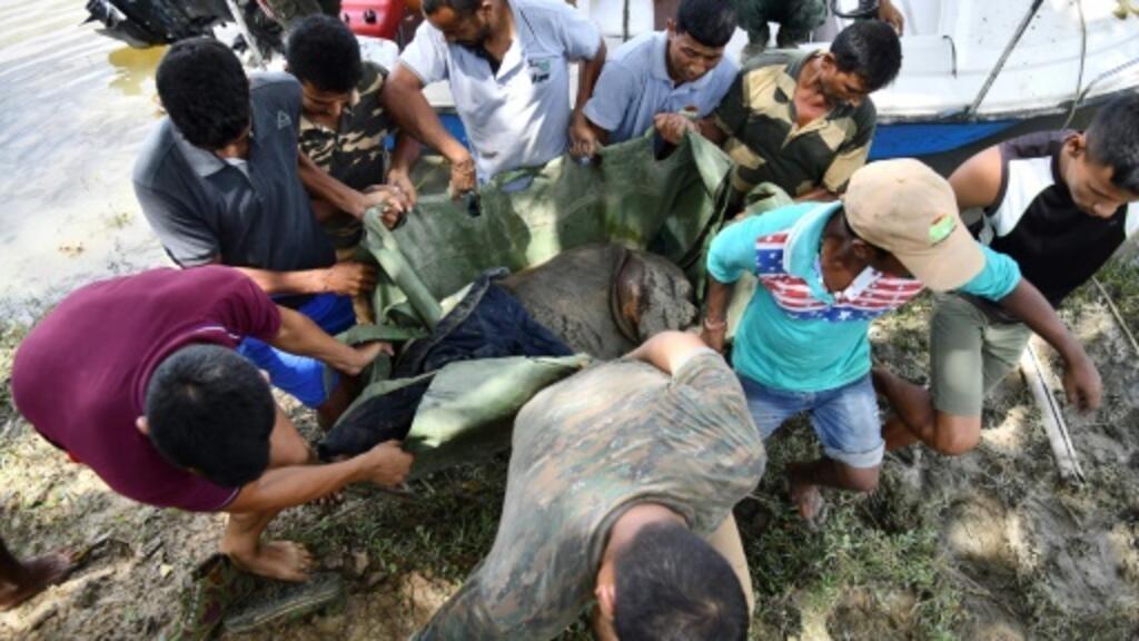 Battle to rescue wildlife at India's flood-hit animal park