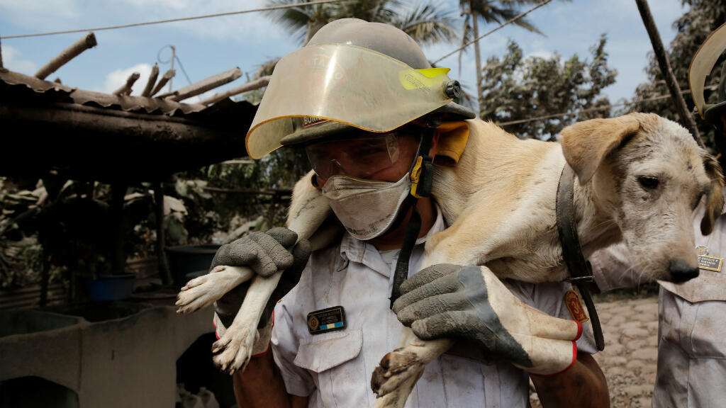 Un bombero carga un perro en un área afectada por la erupción del Volcán Fuego en la comunidad de San Miguel Los Lotes en Escuintla, Guatemala el 5 de junio de 2018.