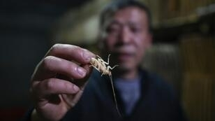 Cockroach farmer Li Bingcai breeds the insects in southwest China, and sells them to restaurants to be served up in local cuisine