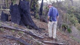 Focus Australia busfires